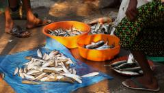 Panning medium shot of early morning fish market and legs in Fort Kochi, India Stock Footage