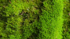 Beautiful moss Stock Footage
