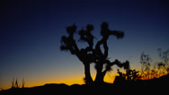 SUNRISE COLORS AT JOSHUA TREE NATIONAL PARK Stock Footage