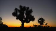 SUNRISE COLORS AT JOSHUA TREE NATIONAL PARK # 4 Stock Footage