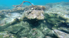 Rainforests of the sea coral reefs, Southern Hemisphere - stock footage