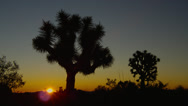 SUNRISE COLORS AT JOSHUA TREE NATIONAL PARK # 6 Stock Footage