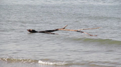 Branch In The Sea Stock Footage