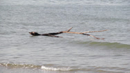 Stock Video Footage of Branch In The Sea