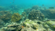 Stock Video Footage of Rainforests of the sea coral reefs, Southern Hemisphere