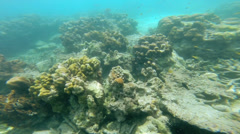 Marine life below ocean waves, Southern Hemisphere - stock footage