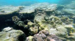 Sea life below ocean waves, Southern Hemisphere - stock footage