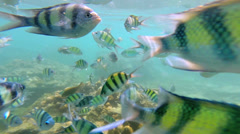 Tropical fish in clear blue waters, Andaman Sea Stock Footage