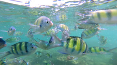 Tropical ocean fish feeding Southeast Asia - stock footage