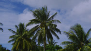Stock Video Footage of COCONUT PALM TREE (ZOOM IN)