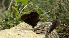 Butterfly's on the Italian Swiss Alps near Locarno. Stock Footage