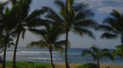 OAHU – HAWAII – PALM TREES BY THE OCEAN (PAN) Stock Footage