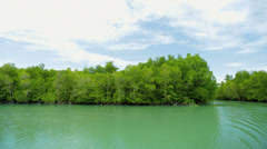 Mangrove Forests beauty in nature, Thailand - stock footage