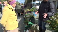 Stock Video Footage of seller seedling market