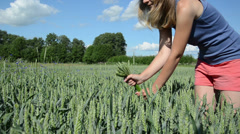 Cute girl in pink shorts pick wheat ears in agricultural field Stock Footage