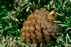 Conifer cone Stock Photos