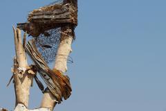 Tornado Damage - Severe Storm Debris in the Tree Stock Photos