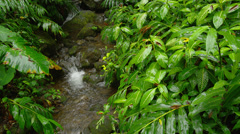 HAWAII – SMALL CREEK IN TROPICAL FOREST (PAN) Stock Footage