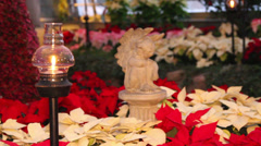 Baby Angel in a garden of Ponsettias,  Christmas Decor Stock Footage