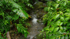 HAWAII – SMALL CREEK IN TROPICAL FOREST (TILT UP) Stock Footage