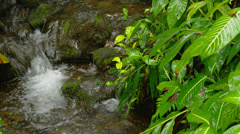 HAWAII – SMALL CREEK IN TROPICAL FOREST (CLOSE) Stock Footage