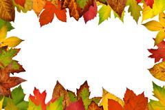 border of autumn leaves.white isolated - stock photo