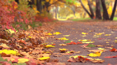 Autumn Leaves Falling in autumnal Park Stock Footage