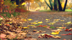 Autumn Leaves Falling in autumnal Park. Fall - stock footage