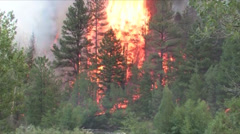 High Park Forest Fire Stock Footage