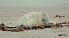 Baby seal at the beach Stock Footage