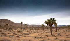 Joshua Tree National Park, California - stock photo