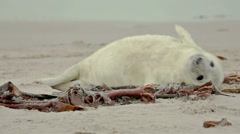 Young seal at the beach Stock Footage