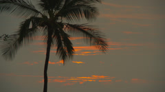 PALM TREES WITH ORANGE CLOUDS Stock Footage