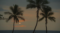 PALM TREES WITH ORANGE CLOUDS (ZOOM IN) Stock Footage