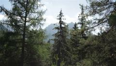 Nature wilderness Stock Footage