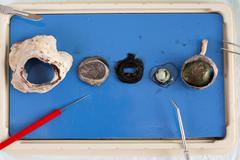 Dissecting a sheep eye Stock Photos