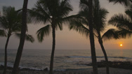 HAWAII – SUNSET AT KONA WITH PALM TREES (PAN) # 3 Stock Footage