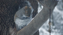 Cold Squirrel 2 Stock Footage