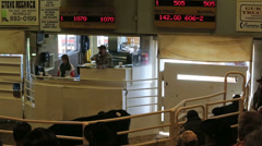 Selling livestock cattle auction ranchers HD 0322 Stock Footage