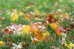 Colorful autumn leaves fallen in the grass Stock Photos