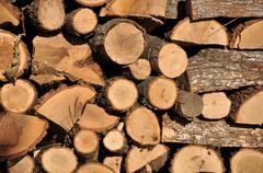 Pile of beech fire wood Stock Photos