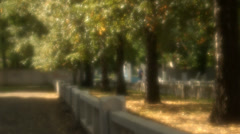 Trees in autumn, falling foliage Stock Footage