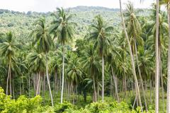 coconut palm trees - stock photo