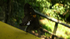 Close up of a Butterfly Stock Footage