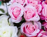 Stock Photo of pink fabric roses