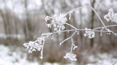 Hoarfrost on a branch, and on the grass Stock Footage