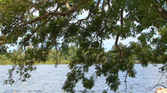 Tree At Riverbank Stock Footage