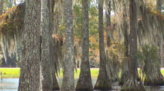 Rain In Cypress Trees Stock Footage