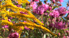 Pink and Yellow Flowers Stock Footage
