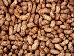 Groundnuts - stock photo